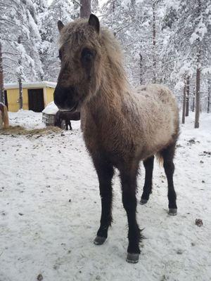 Gandalf, januari 2014