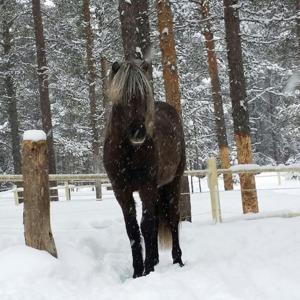 Gandalf en vintrig dag i slutet på mars 2015.