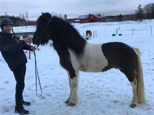Reynir & Undri, januari 2017