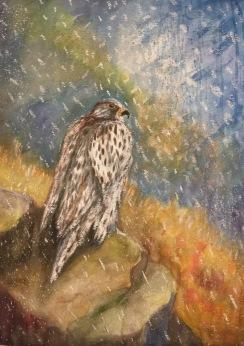 Jaktfalk. Akvarell, pastell. Mått: 54 x 74 cm