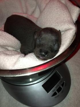 Muffin somnat i vågskålen.