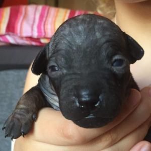 Cherrie (Daisy) har öppnat ögonen 11 dagar gammal