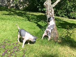 Freja betar och Zoya klättrar