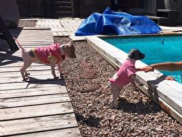 Ziri och Zuri är nyfikna på poolen
