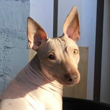 Vinterblek Isa, men nosen och ögonen berättar att hon allt är en brun hund ändå.