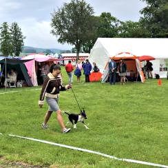Första gången Dixie ställde en hund var i Väneresborg 8 juni 2019.