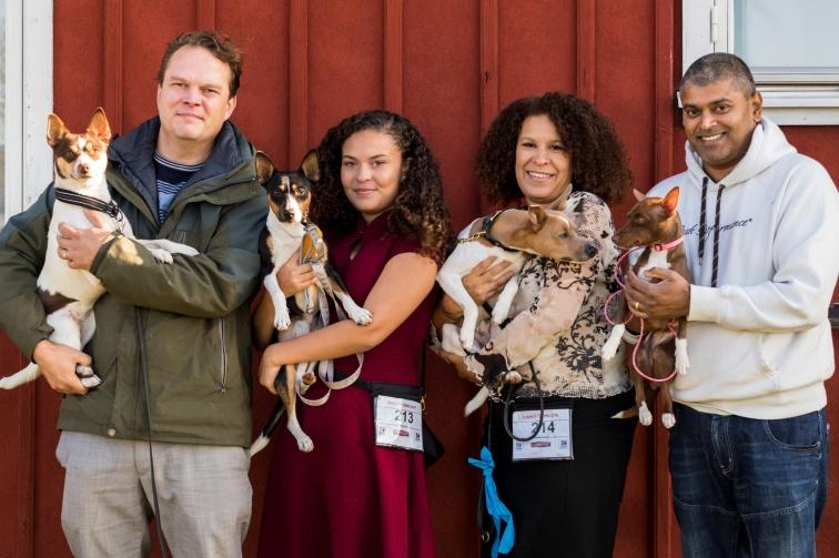 Alla våra Rat terriers på utställing :)