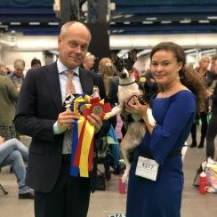 Nordisk Vinnarutställning 2019 i Stockholm där Dixie 13 år gammal slog oss andra och vann med sin Obi :)