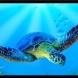 Turtle Sealife airbrushstencil - Turtle sealife