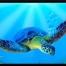 Turtle Sealife airbrushstencil