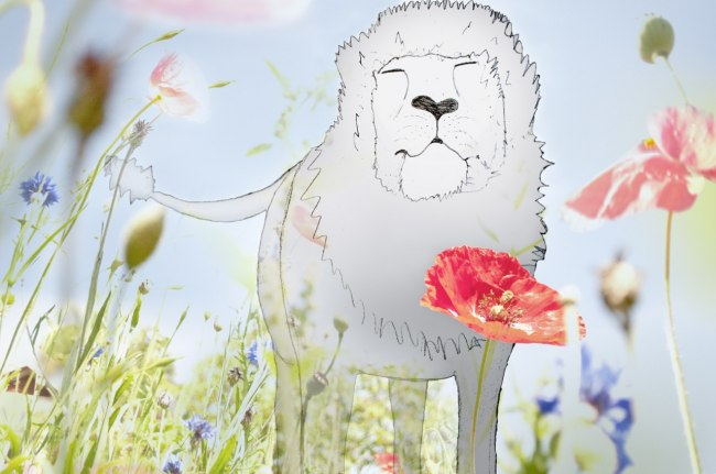 12. Lejon bland sommarblommorna