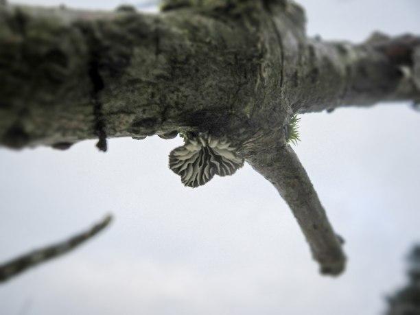 Foto på flädermusslingen på fyndplatsen