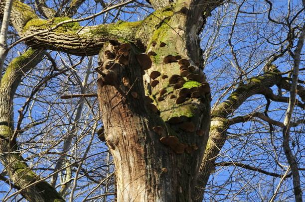 Ett träd fullt av tickor!