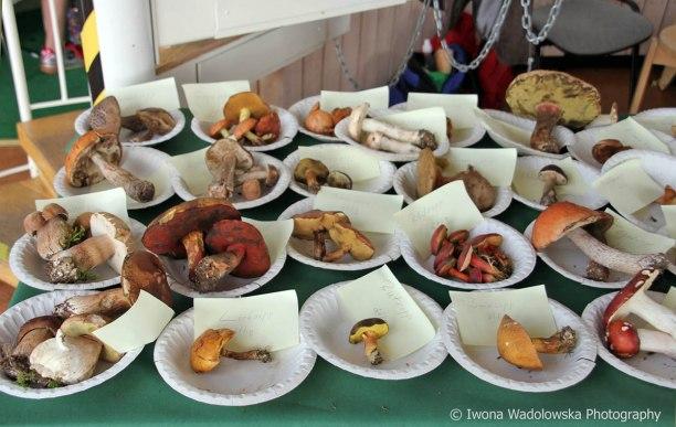 Det finns många olika soppar, men vilka går att äta?