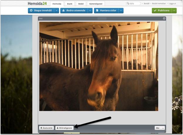 """""""FÖRE"""" Fotot på hästen är tagen inne i stallet där belysningen ger en gul färg till hela bilden."""
