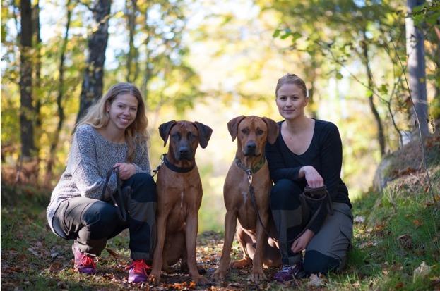 Hundogram, lansering, tjänst, marknadsföring, Hemsida24
