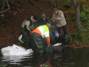 Jan Erik, Åke, Östen, Björn & Magnus sorterar fisk.