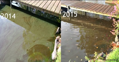 Färre algblomningar och påväxtalger (se stenen nere till höger), bild tagen samma dag i sep både 2014 & 15