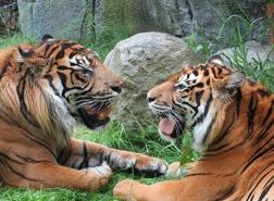 Bild: Ålborg Zoo