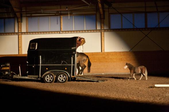 Från Siljan Horse Show när Offa galopperar in i transporten med sin häst