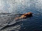 Nova älskar att simma!