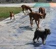 Hundarna tränar inför BPH! ;)