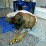 Leya vilar ut efter operationen