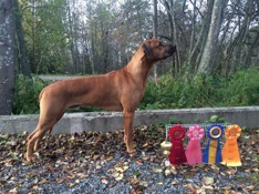 Aaron, EXC, CAC, r-CACIB 4th Best Male