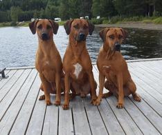 Nikki, Minus and Telma