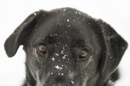 85ca059bee9 Vatten är av lika stor vikt vintertid som sommartid. Ta gärna med dig  ljummet vatten till hunden om ni är ute länge. Vissa hundar äter snö eller  dricker ur ...
