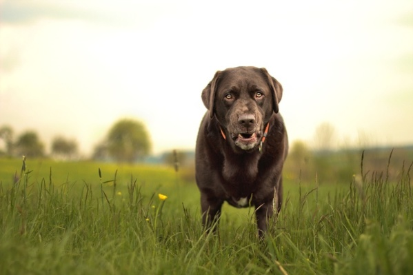 Vi tar emot alla hundar och alla problem. Stora som små.