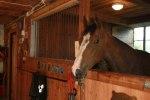hästar 003