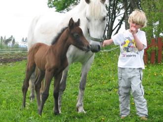 Simon med ponny Molly Bay och Lamborgini Bay.