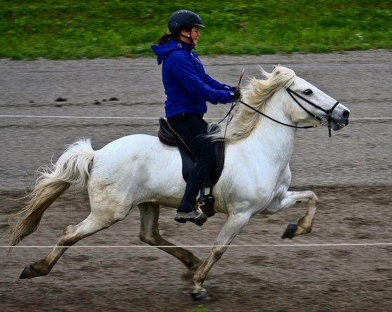 Birta frá Flögu, avelsvisning Wången 2011. Fotograf Ida Melkersson