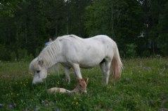 Ester med sin son myser i gräset -12