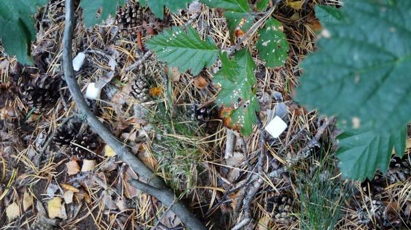 Hungriga myror fick bitsocker