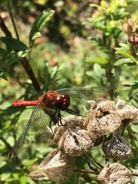 Insekts besök i lekparken