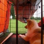 Wilma höll ställningen ifrån tältet