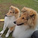 Egon och Goldie