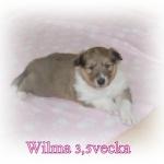 wilma3,5vecka