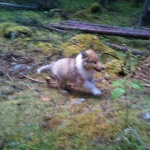 Full fart på Wilma