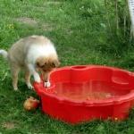 Wilma funderar på att bada