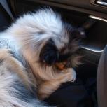Mys i bilen