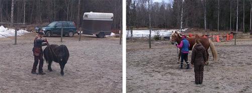 Åsa och Wilda t.v. och Anna med Skärpan t.h