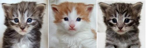 - 3 weeks old -