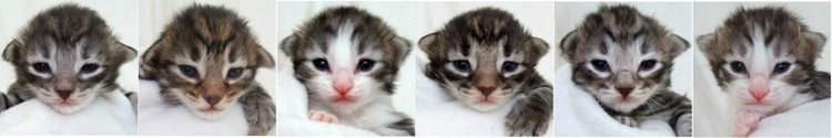 - 2 veckor gamla / 2 weeks old -