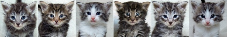- 4 veckor gamla / 4 weeks old -
