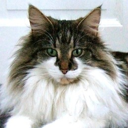 GIC S*Just Catnap's Fabia, n 03 22