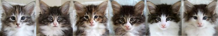 seven weeks old / sju veckor gamla