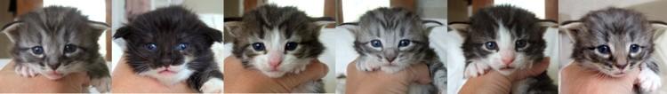 - tre veckor gamla / three weeks old